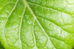 grön leaf Närbild Royaltyfria Bilder