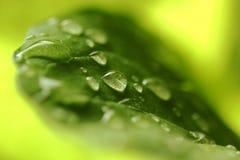 Grön Leaf och dagget Royaltyfri Fotografi