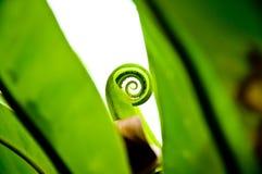 Grön leaf som isoleras på vit bakgrund Arkivbild