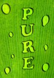 "Grön leafbakgrund med ""den RENA"" inskriften, Royaltyfri Foto"