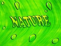 "Grön leafbakgrund med bevattnar inskriften ""NATUR"", Arkivbilder"