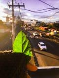 Grön leafe tapetserar med huvudvägen bakom royaltyfri bild