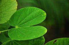 grön leafform royaltyfri fotografi