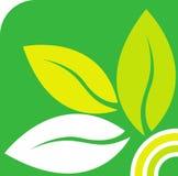 grön leaflogo Arkivbild