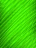 grön leafmakro Arkivfoton