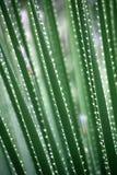 grön leafmodell royaltyfria bilder