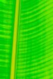 grön leafmodell Arkivfoto
