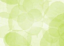 grön leafmodell för bakgrund Royaltyfri Foto