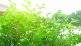 grön leafnatur fotografering för bildbyråer