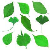 Grön leafset Royaltyfri Fotografi