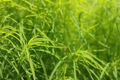 grön leafsmakro Royaltyfri Foto