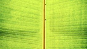 grön leafstem Fotografering för Bildbyråer
