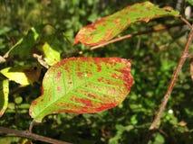 grön leafstruktur Royaltyfri Fotografi