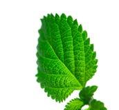 grön leafstruktur Arkivbild