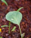 grön leaft med vattendroppar Arkivfoton