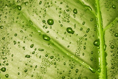 grön leaftextur Arkivbilder