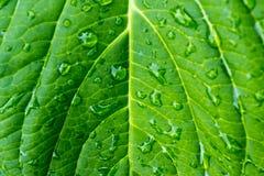 grön leaftextur royaltyfria bilder
