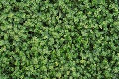 grön leaftextur Bladtexturbakgrund från bästa sikt royaltyfri bild
