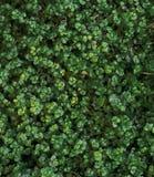 grön leaftextur Bladtexturbakgrund från bästa sikt arkivbild