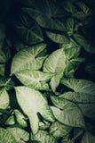 grön leaftextur Bladtexturbakgrund i tappningstil Fotografering för Bildbyråer