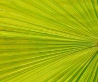 grön leaftextur för bakgrund Arkivfoton