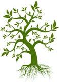grön leaftree Arkivfoton