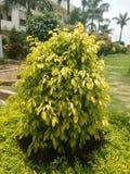 grön leafväxt Arkivbilder