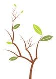 grön leafväxtvektor Royaltyfri Foto
