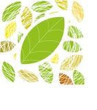 grön leafvektor för bakgrund Arkivbilder