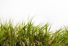 grön leafwhite för bakgrund royaltyfri foto