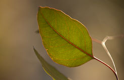 grön leared Arkivfoto