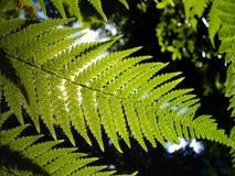 grön leave Arkivfoto