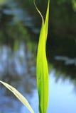 grön leave Fotografering för Bildbyråer