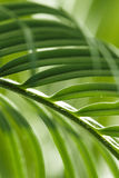grön leave gömma i handflatan Royaltyfri Foto