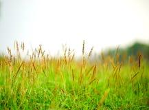 Grön leave på vit bakgrund arkivbilder