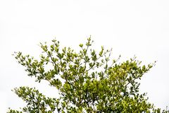 Grön leave på vit bakgrund arkivbild