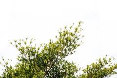 Grön leave på vit bakgrund fotografering för bildbyråer