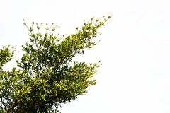 Grön leave på vit bakgrund royaltyfri fotografi