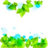 grön leavesfjäder för bakgrund Arkivfoton