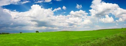 grön liggande Fotografering för Bildbyråer