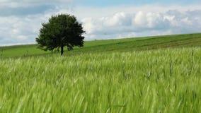 grön liggande Arkivfoto