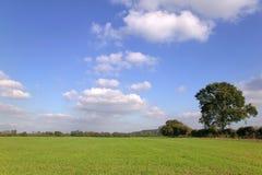 grön liggande för fält arkivfoton