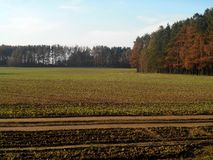grön liggande för fält Arkivfoto
