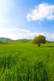 grön liggande för fält Arkivbilder