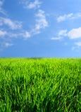 grön liggande för gräs fotografering för bildbyråer
