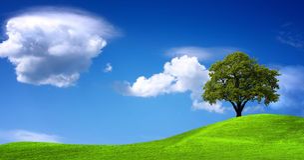 grön liggandepanorama Arkivfoton