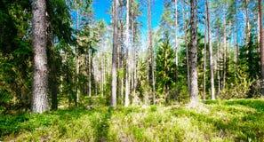 grön liggandesommar Arkivfoton