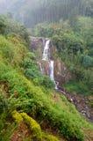 grön liggandevattenfall Royaltyfria Foton