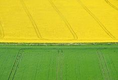 grön liggandeyellow för fält Royaltyfri Foto