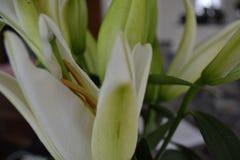 Grön lilja som är vit och royaltyfri fotografi